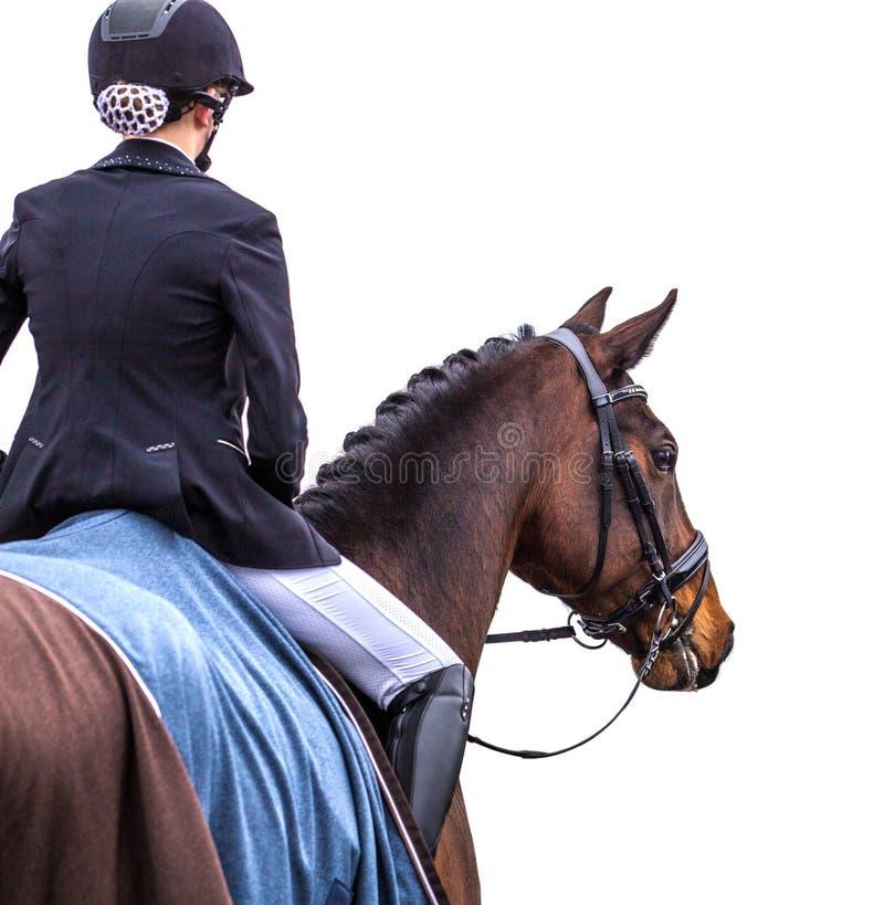Ruiter op paard op wit stock afbeelding