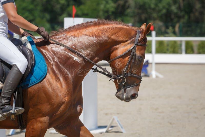 Ruiterritten op de ritten van het kastanjepaard op een renbaanclose-up royalty-vrije stock afbeelding