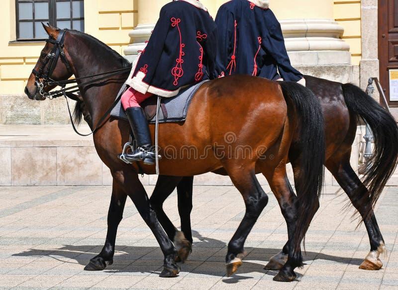 Ruiters op de straat op paarden stock afbeelding
