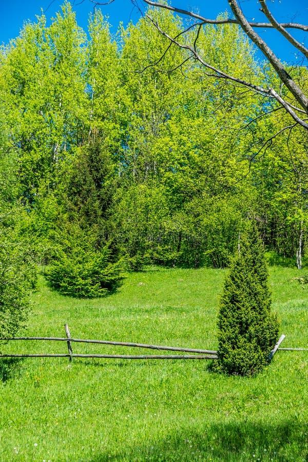 Rujnujący drewniany ogrodzenie i zwarci gąszcze zdjęcia royalty free