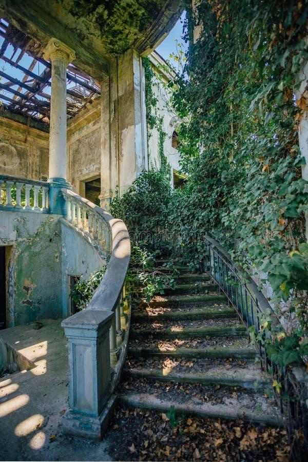 Rujnujący dworu wnętrze przerastający roślinami Przerastać bluszcza ślimakowatym schody kolumną i obraz stock