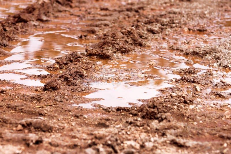 Rulla spåret på vägen, pöl och gyttja efter regn Spår på jord av traktoren, grävskopa, bil, automatiska gummihjulspår på lerig sl royaltyfria foton