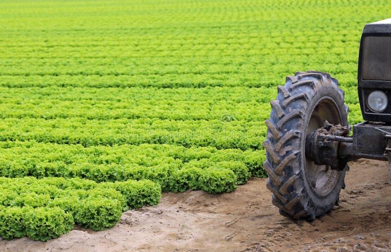 Rulla traktoren som klibbas i gyttjan av det kultiverade fältet arkivbild
