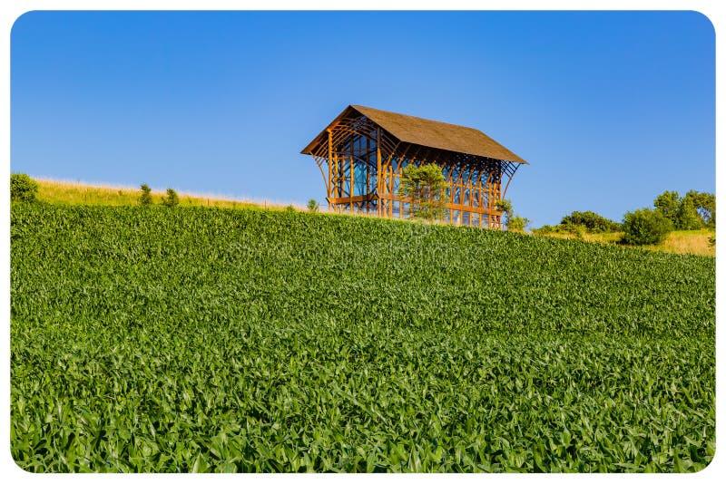 Rullande fält av det unga havrefältet på en lantgård i Gretna Nebraska arkivbilder
