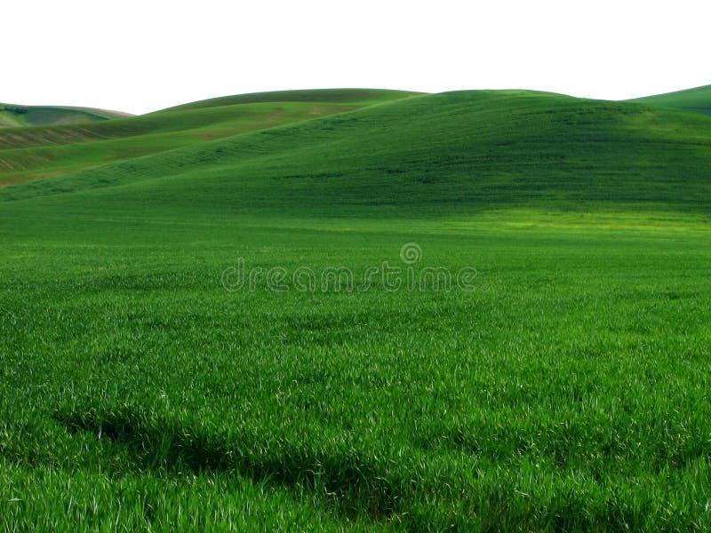 Rullande gröna kullar i det staten WashingtonPalouse landet royaltyfria bilder