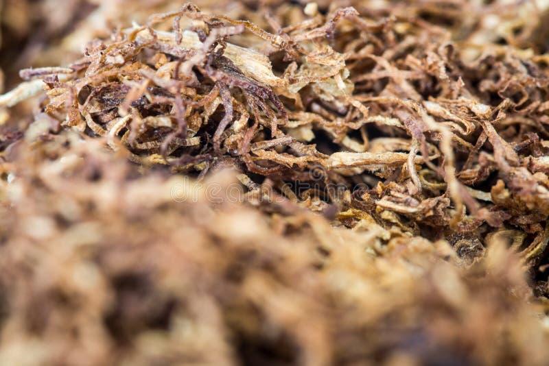 Rullande tobakmakro arkivbilder