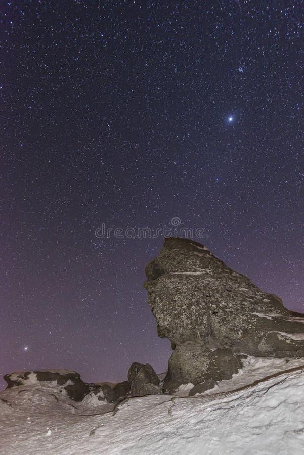 Rumäne Sphynx stockbilder