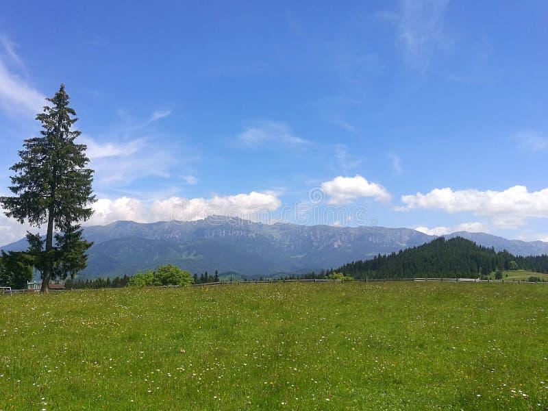 Rumänien-Berg lizenzfreies stockfoto
