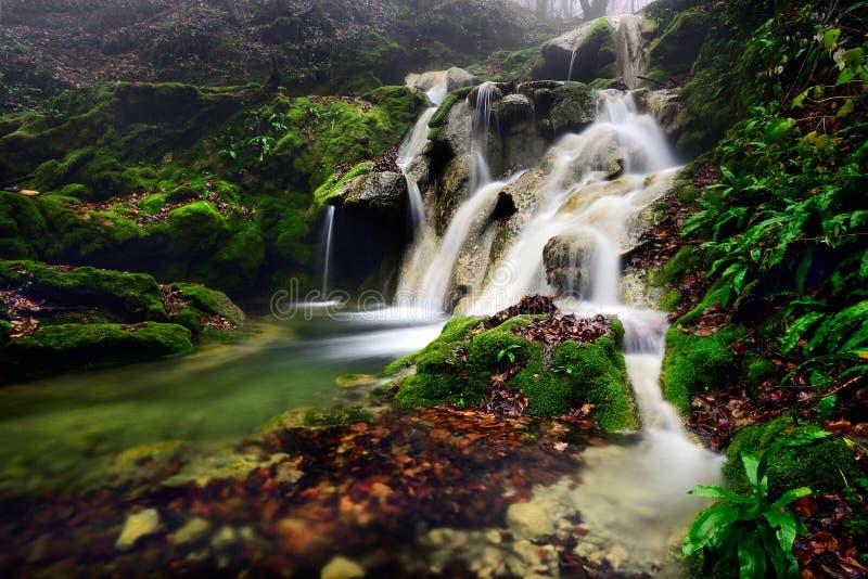 Rumänien parkerar den härliga landskapvattenfallet i skogen och naturliga Cheile naturliga Nerei arkivfoton