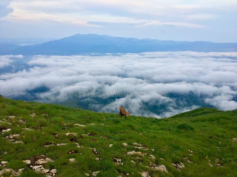 Rumänien, Piatra Craiului-bergen, Viewpoint från Grind 2 Refuge arkivfoton