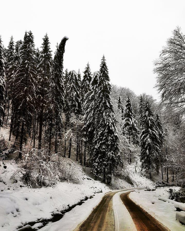 Rumänische weiße Wildnis stockbilder