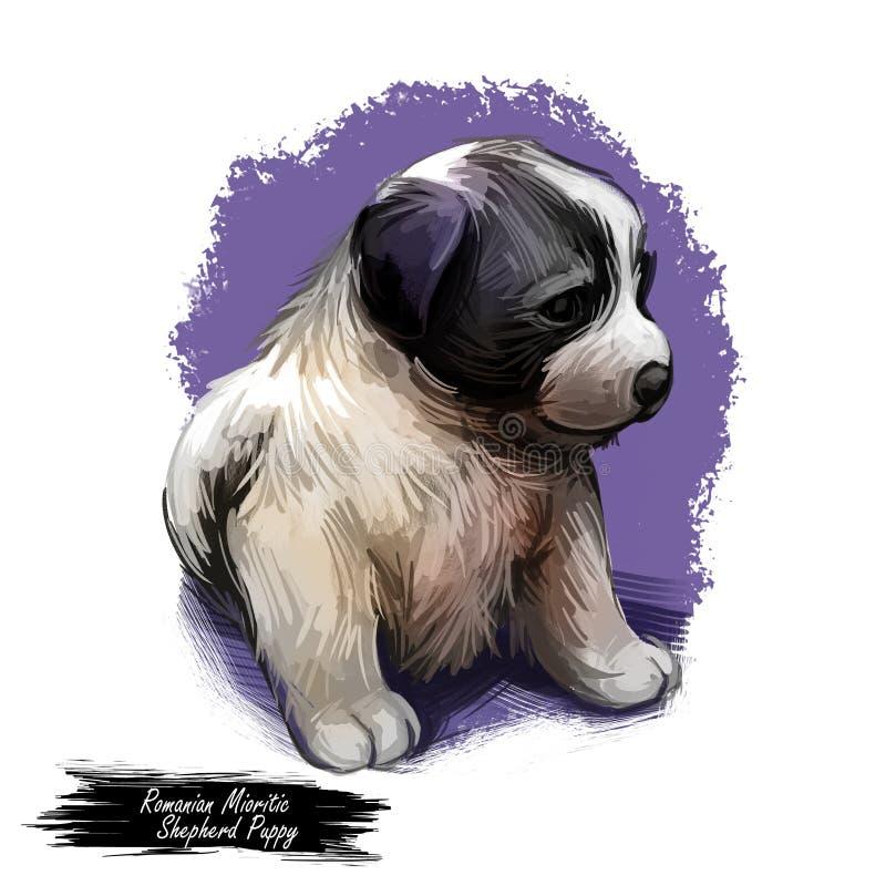 Rumänischer mioritic Schäferhund, Jagdhund von der Karpatengebirgsdigitalen Kunst lizenzfreie abbildung