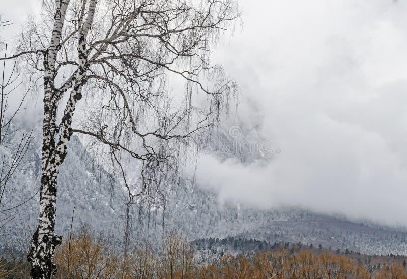 Rumänskt bergområde med pinjeskogen och dimma, vintertid royaltyfri bild