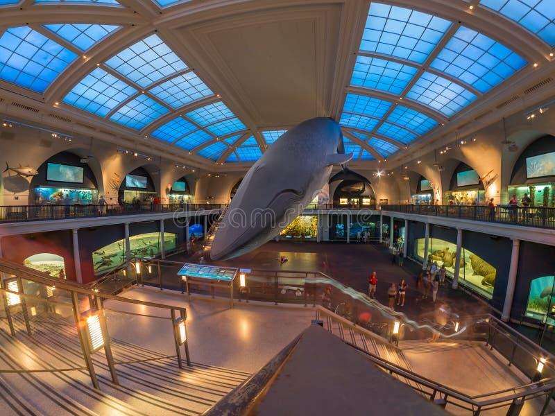 Rum för marin- liv på det amerikanska museet av naturhistoria i Ne arkivbild