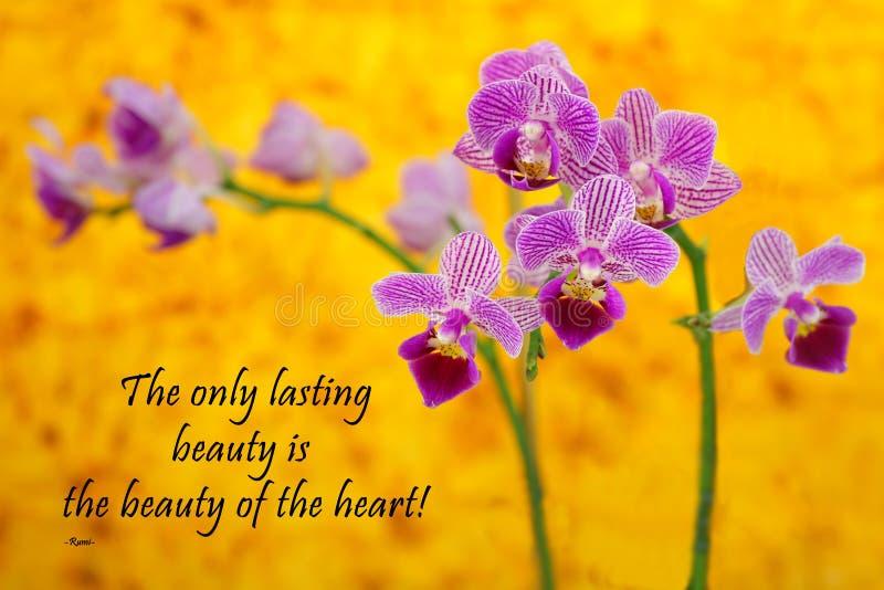 Rumi - orchidée sur le jaune image libre de droits