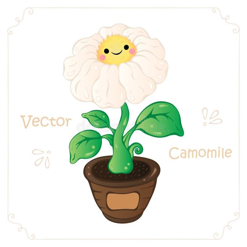 Rumianek, stokrotka kwiatu wektor Rumianek, ślicznego kreskówki stokrotki kwiatu wektorowa ilustracja dla pepiniery, książka dla  ilustracja wektor