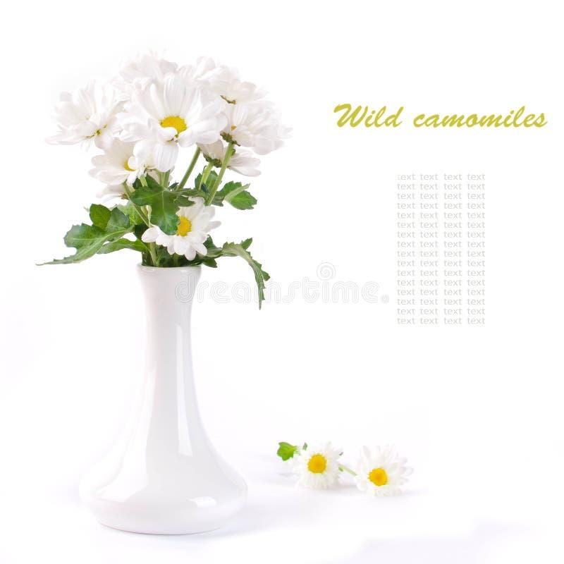 rumianki odpowiadają wazę zdjęcie royalty free