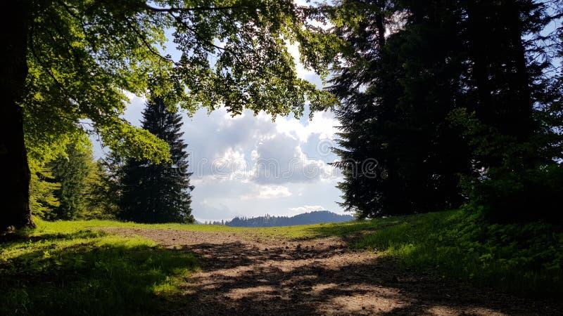 Rumuński piękno zdjęcie stock