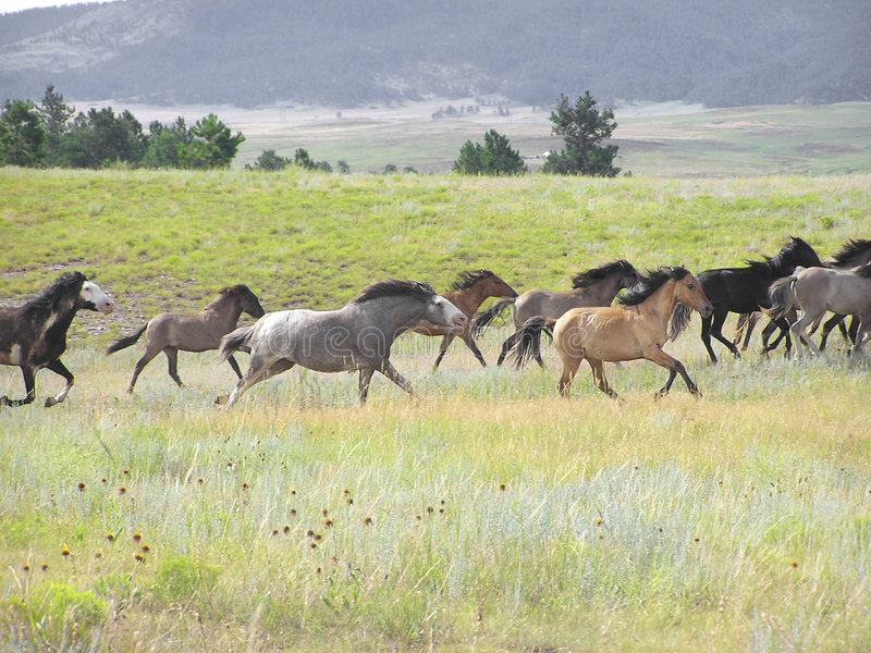 Download On The Run stock image. Image of mare, filly, strength - 185525