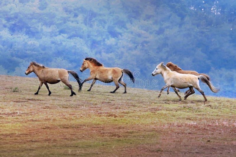 Run Free. Horse run free at dalat, Viet Nam royalty free stock images