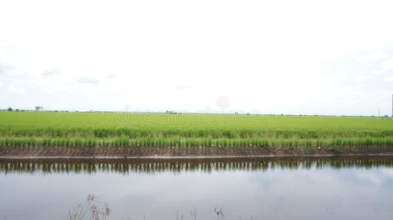 Run in between the paddy fields? stock photos