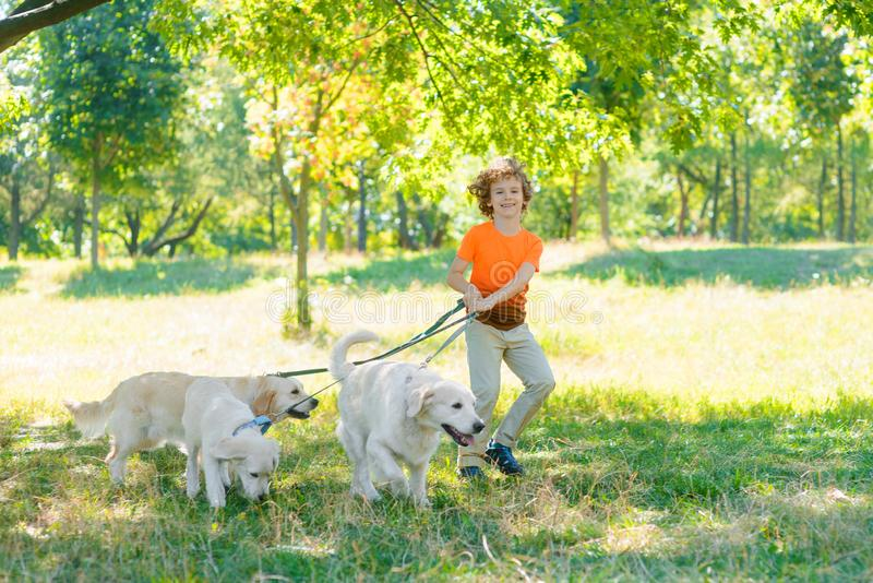 Run of three dogs and one boy. Run of three pets and one boy in the park with a lot of juicy grass. Little child holds a dog-lead and looks in the camera with royalty free stock image