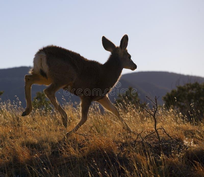 Download Runaway deer stock photo. Image of animal, wildlife, grass - 27080224