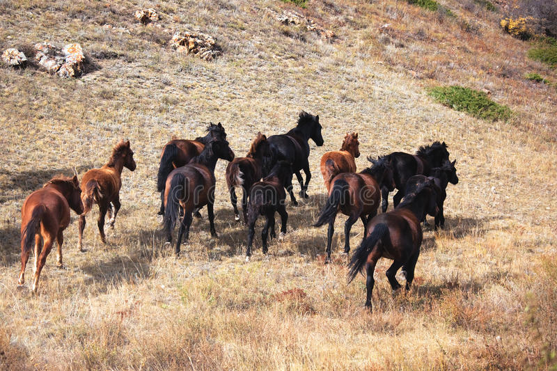 Runaway horses. In the mountains royalty free stock photos