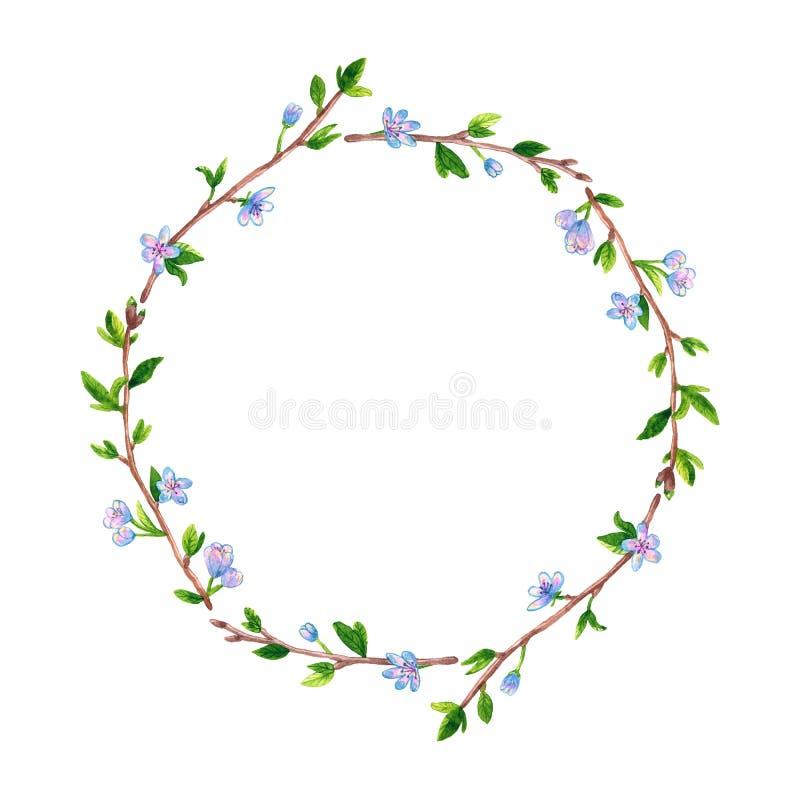 Rund blom- ram med vårfilialäpplet eller det körsbärsröda trädet Hand dragen vattenf?rgillustration Isolerat p? vit vektor illustrationer