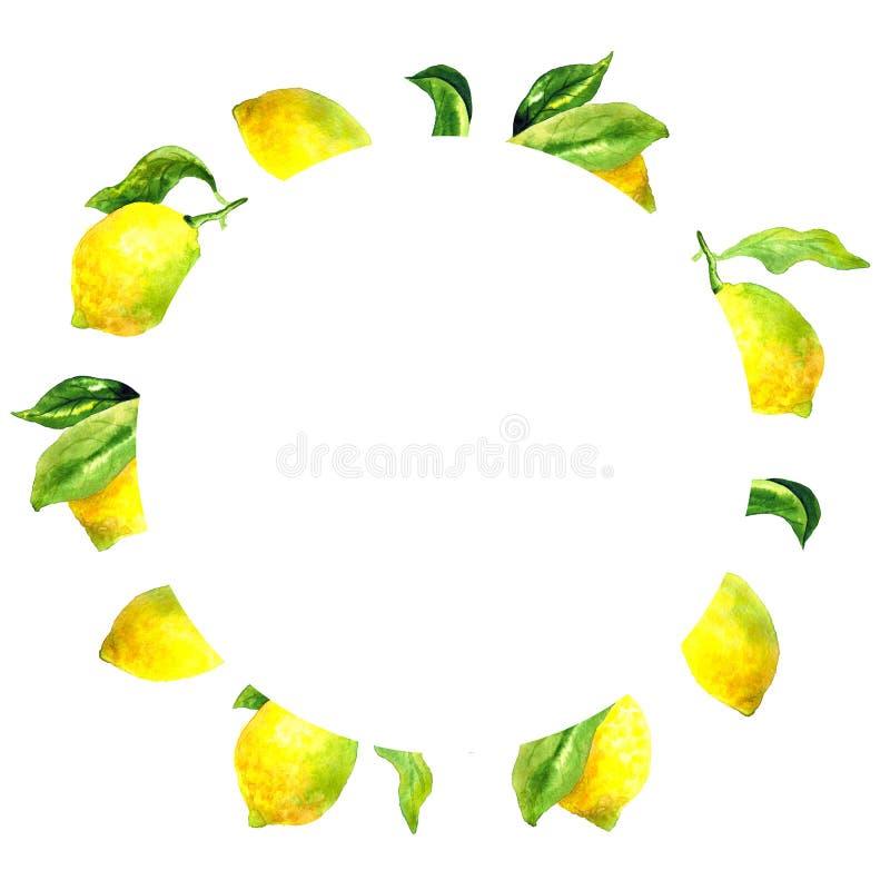 Rund botanisk ram med citroner och sidor Dragen vattenf?rghand stock illustrationer