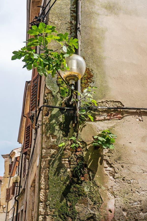 Rund exponeringsglaslyktalampa på en gammal vägg för tegelsten som täckas med murgrönan på hörnet av huset arkivfoton