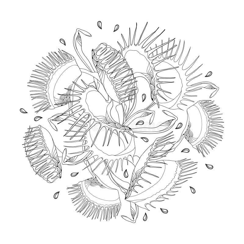Rund sammansättning för vektor av den Venus Flytrap eller Dionaeamuscipulaen i svart som isoleras på vit bakgrund Köttätande trop royaltyfri illustrationer
