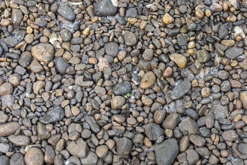 Runda bruna stenar på botten av en torkad-upp liten vik royaltyfria foton