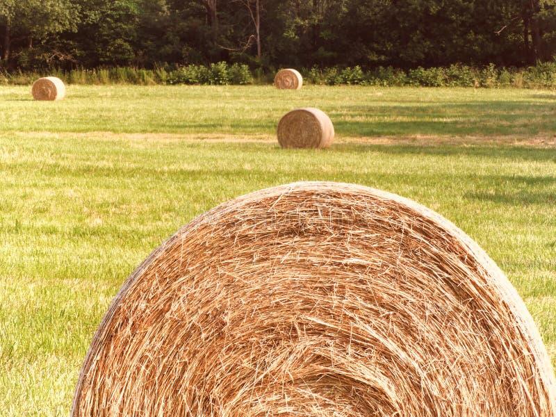 Runda höbaler sitter i nyligen klippt höfält i FingerLakes NYS arkivfoto