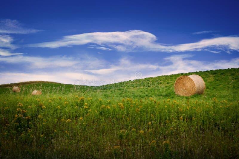 Runda ok av hö i ett bondefält arkivbilder