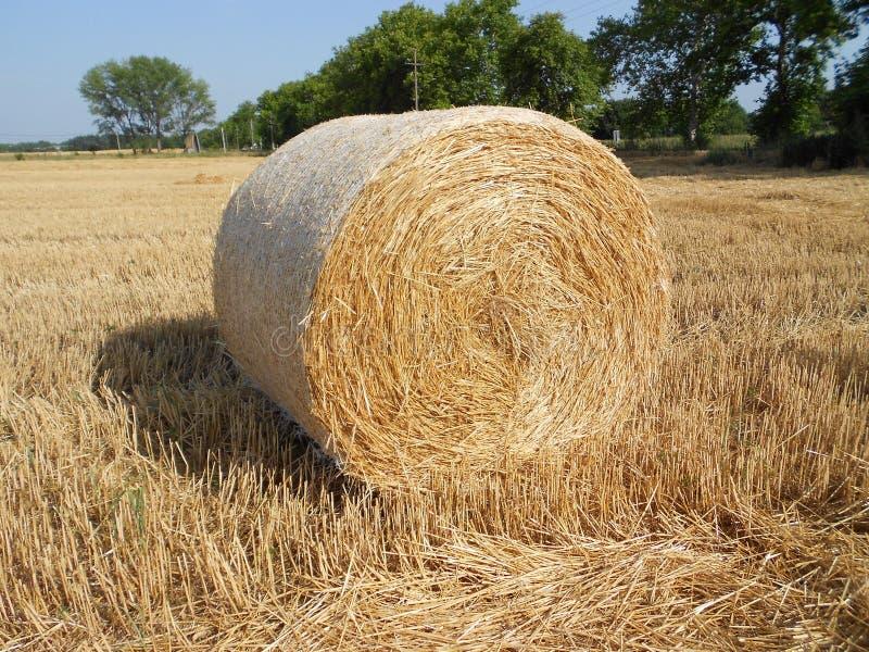 Rundballen auf Feld, Erntezeit lizenzfreie stockbilder