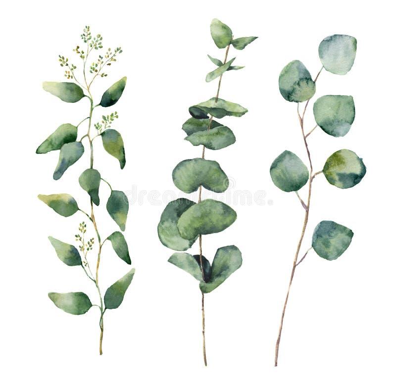 Runde Blätter und Niederlassungen des Aquarelleukalyptus eingestellt Handgemalte Eukalyptuselemente des Baby-, gesäten und silber lizenzfreie abbildung