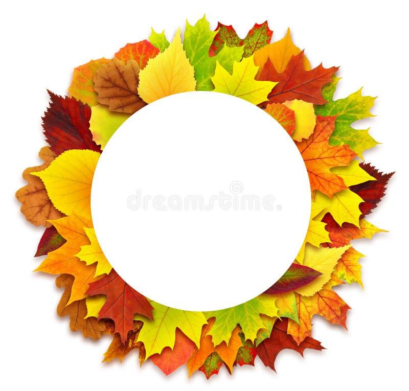 Runde Herbstlaubgrenze stockfotografie