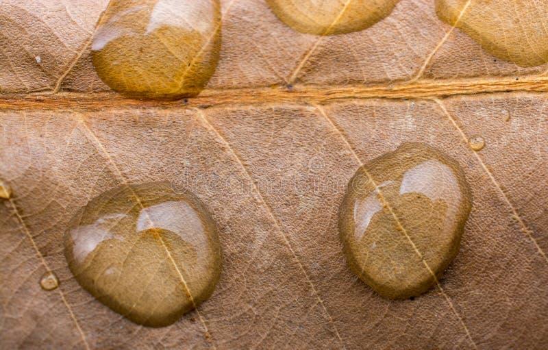 Rundes Wasser fällt in Nahaufnahme auf einem Blatthintergrund lizenzfreie stockfotos
