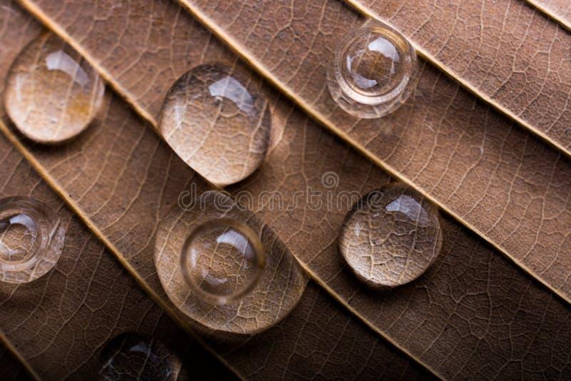 Rundes Wasser fällt in Nahaufnahme auf einem Blatthintergrund lizenzfreies stockfoto