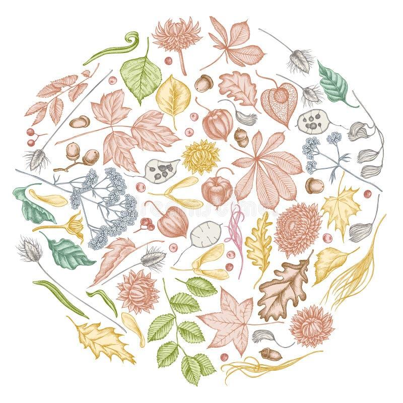 Rundgestaltung mit Pastellrowan, Rowan, Akorn, Buckeye, Farn, Ahorn, Birke, Ahornblättern, Lagurus, Federgras stock abbildung