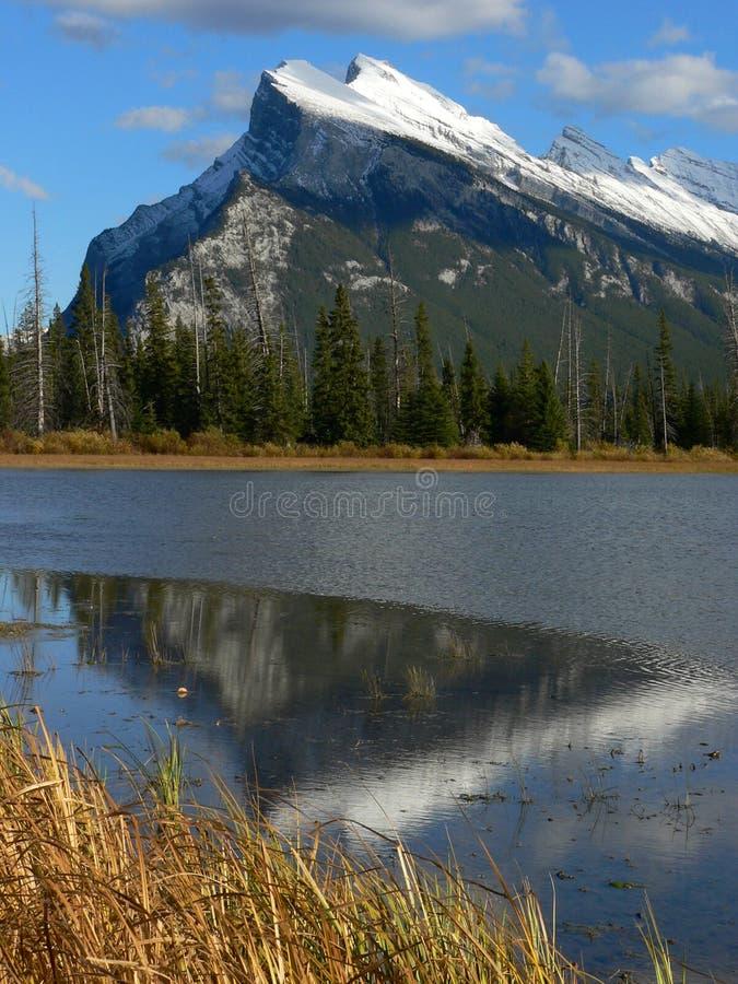 Rundle in autunno immagine stock