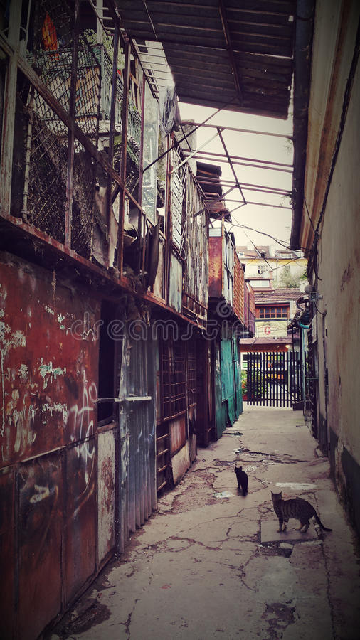 Rundown Alley. With stray cats stock photos