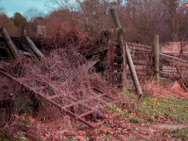 Rundown fence with overgrown weeds on a cattle farm royalty free stock image