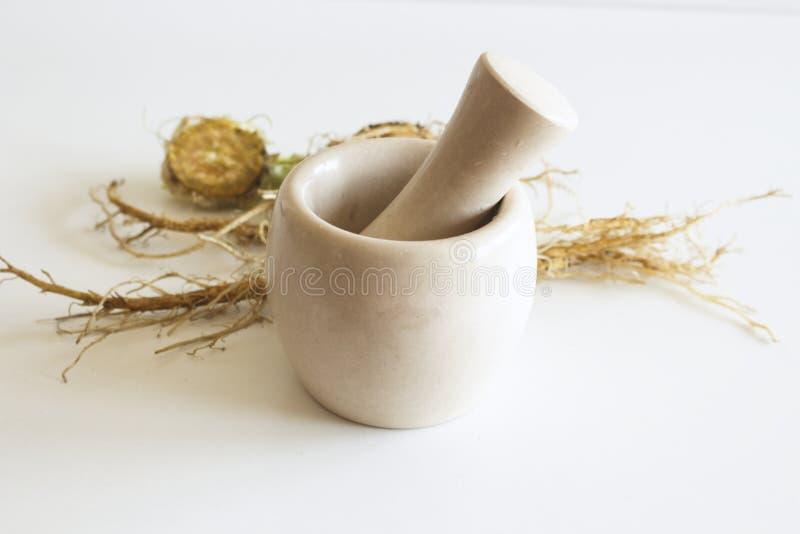Rundrötter Tasel Dipsacus plant och marmor mortel Inom folkmedicinen används deras rötter för att framställa medicinska tinkturer royaltyfria bilder