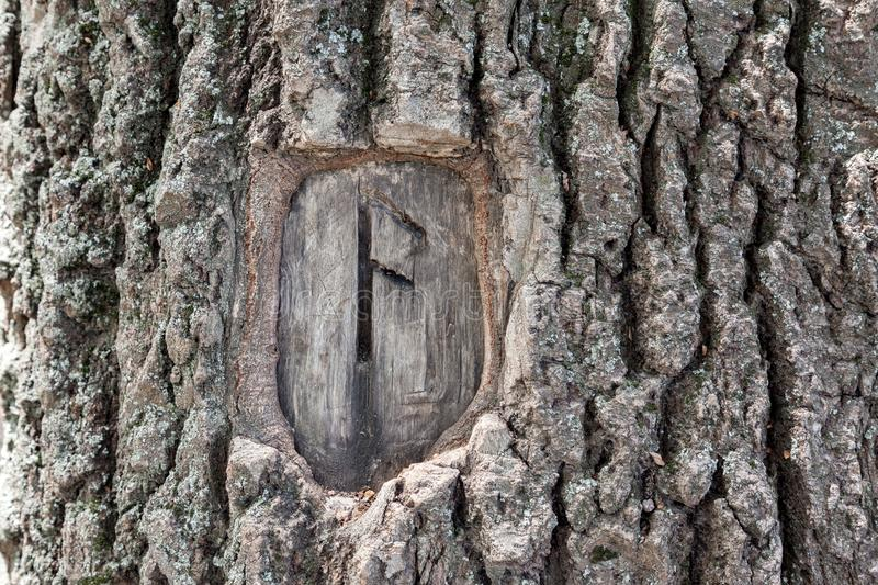 Rune Symbol Ansuz. The rune symbol Ansuz carved in the bark of an old tree, emblematizes creativity, learning, inspiration, consciousness, reason and order royalty free stock image