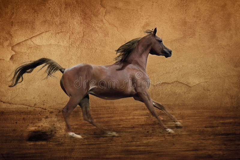 Runing Arabian horse. Chestnut arabian horse runs gallop in arena