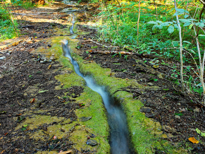 Runlet in bos stock afbeelding