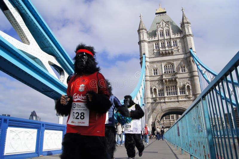 Runners At The 2010 Great Gorilla Run stock photos