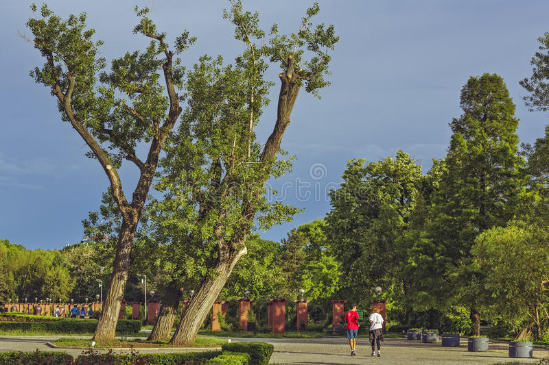 Runners in Herastrau park. Bucharest, Romania - May 16, 2014: Young couple enjoy a morning run on the alleys of Herastrau park, a large public recreation area stock photo